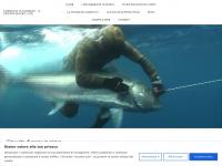 Fabrizio D'Agnano video di pesca in apnea - Fabrizio D'Agnano - Spearfishing video-maker