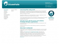 bluewhale.it