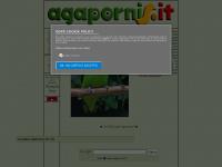 agapornis - lovebird - inseparabili
