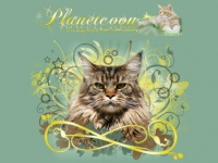 coonland.it mainecoon maine coon