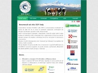 EDF ITALY - Home Page