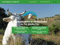 Agriturismo a Collazzone Todi - allevamento e vendita Chianina Umbria